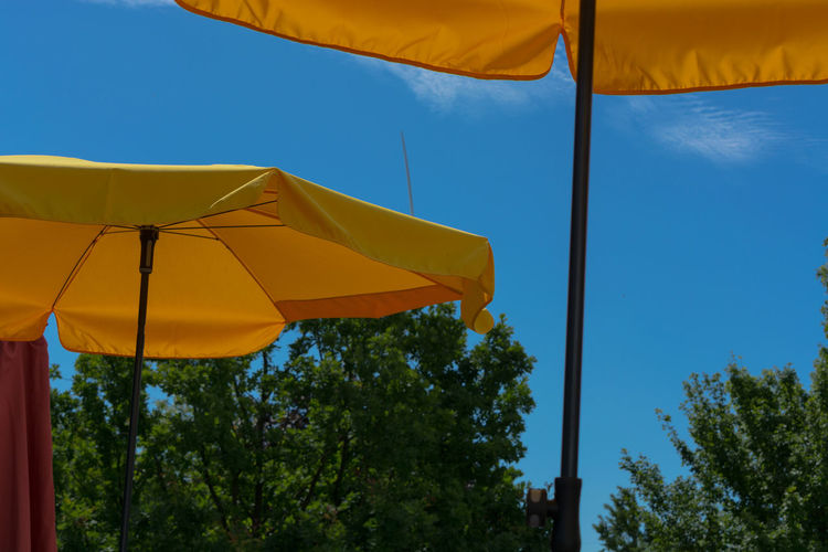 Two yellow parasols with bright sun and blue sky Umbrella Tree Plant Low Angle View Sky Nature Protection Yellow Security Day Blue Parasol No People Outdoors Sunlight Shade Safety Close-up Tranquility