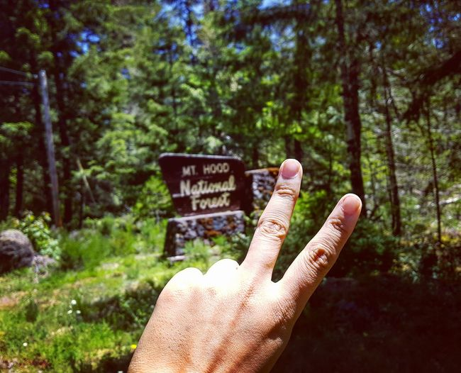 Close-up of fingers gesturing peace sign against plants