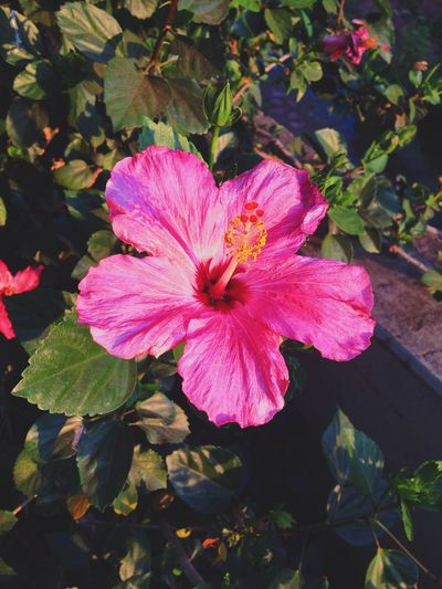 Flower Petal Beauty In Nature Fragility Flower Head Nature Pink Color Plant Day No People