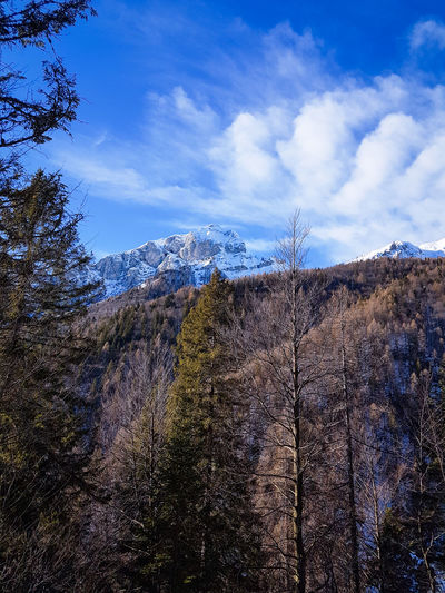 Val Zemola Hiking Clouds Winter Trees Sky Mountain Cloud - Sky Nature Blue Day No People Outdoors Beauty In Nature