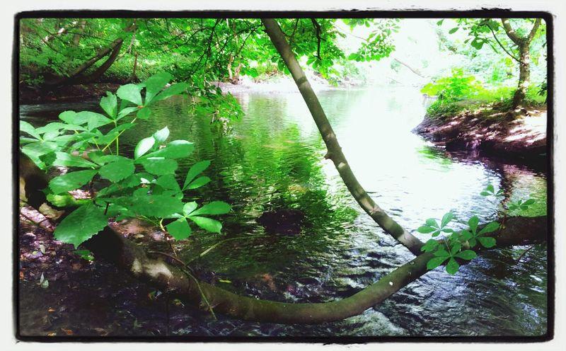 green trees...