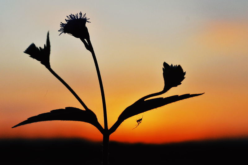 Close-up of silhouette plant against romantic sky at sunset