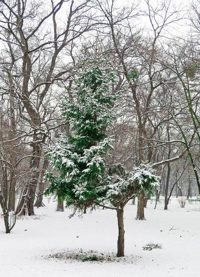 Branch Cold