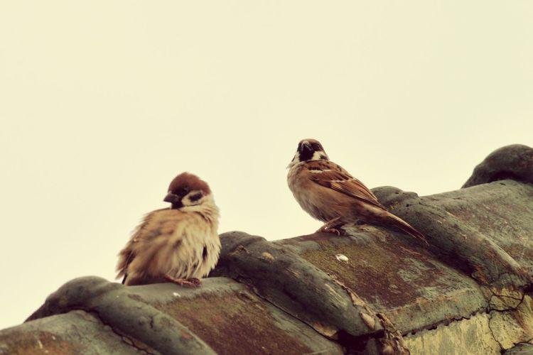 Bird on Day