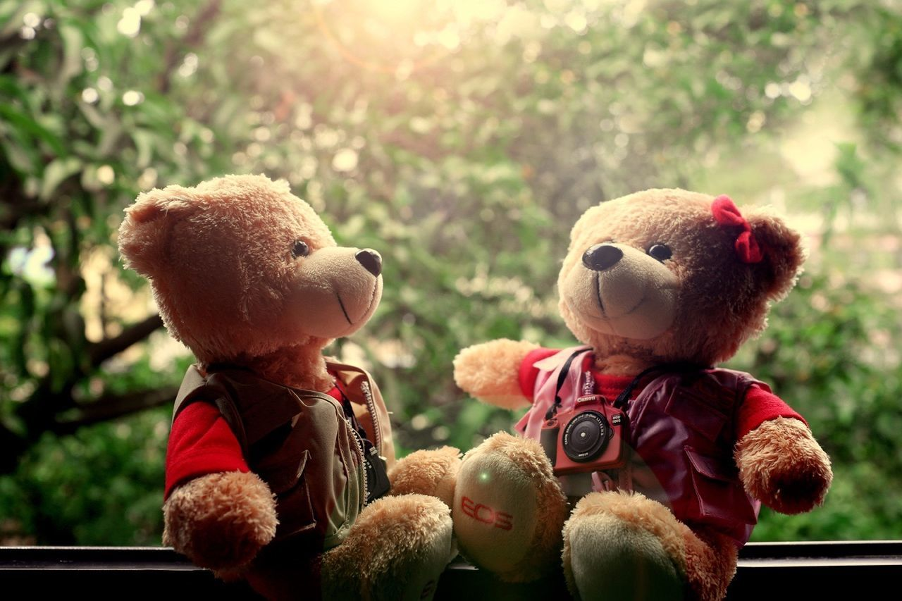 teddy bear, stuffed toy, childhood, toy, smiling, tree, close-up, no people, day, outdoors