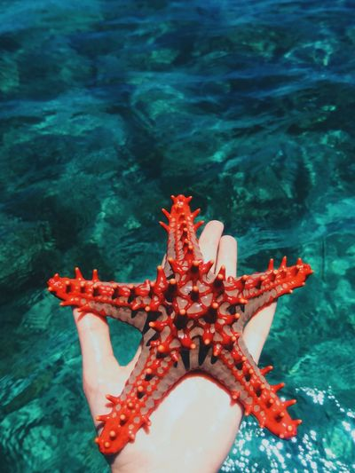 Indian Ocean, Kenya. Water Sea Life Starfish  Underwater Beauty In Nature Nature Close-up Ocean Adventure VSCO Kenya EyeEm Best Edits Africa EyeEm Best Shots Travel Travel Destinations Minimal Fresh On Market 2017