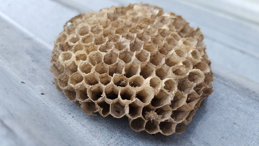 High angle view of bee