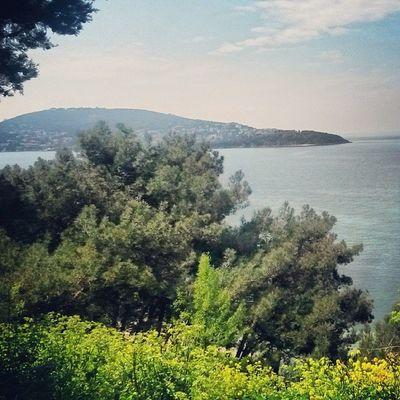 Heybeliada Sea Island Green