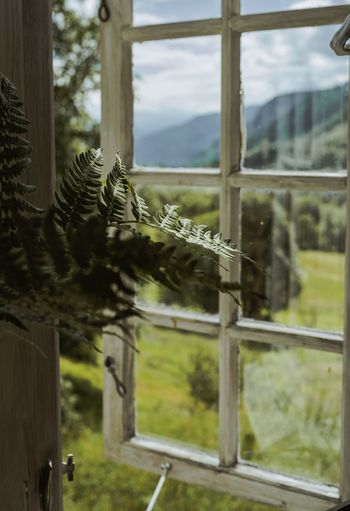 Close-up of tree seen through window