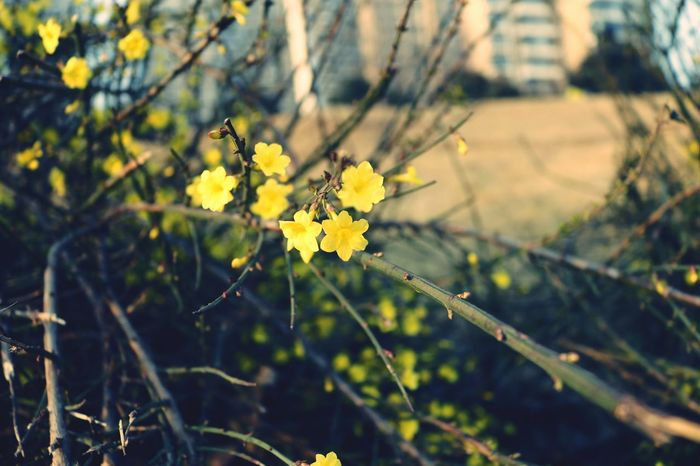 Flower Yellow Nature Blossom Outdoors Fragility Day