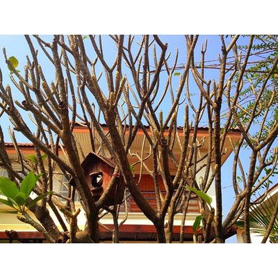 My home ❤️Holiday NewYear 2014 Tree House Thailand Thaionly