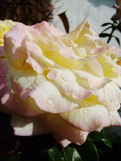 Blossom Waterdrops Flower Waterdrops Flowers Hungary Pink Pink Flower