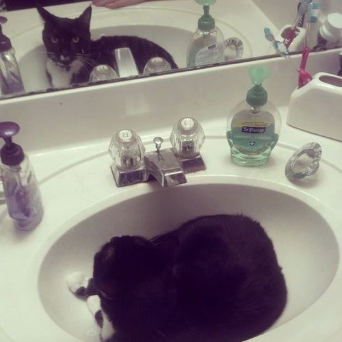 Finishing getting ready and I have a Neko in my sink. Silly cat purring away. Neko Catinsink Sillycat Gettingready obstacle sillymoments haha