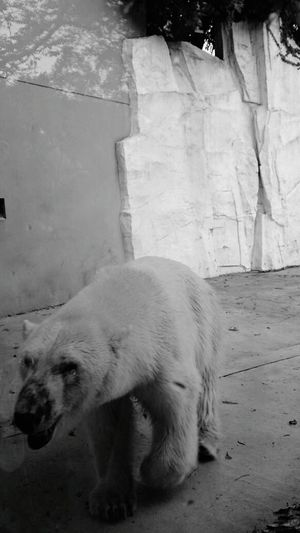 Japan Tokyo Ueno Ueno Zoo Love Uenopark Animals AndroidPhotography Smartphonephotography Holiday