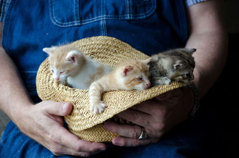 New kittens cuddle in a big straw hat held by a farmer