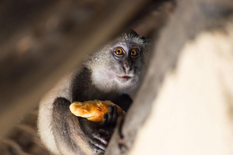 Portrait of monkey holding bread
