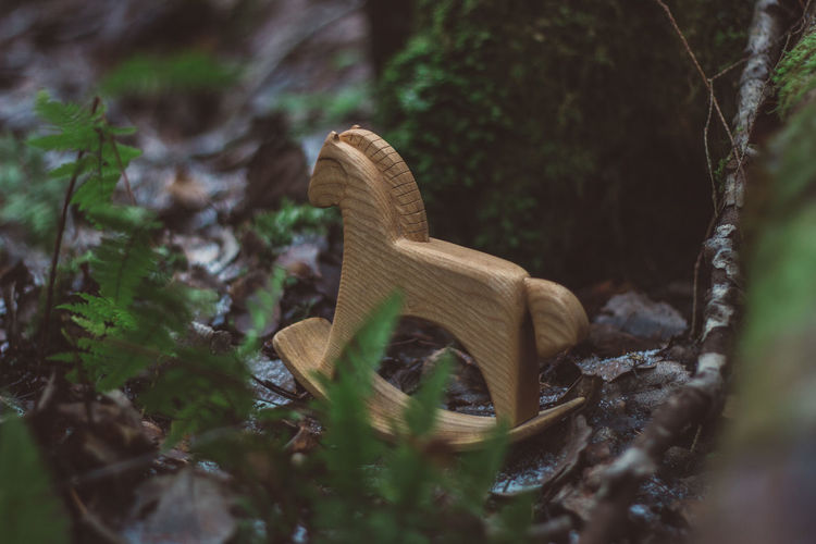 Forest Nature Women Wood Wood - Material Toy Toys Wooden Toys Wooden Horse Horse Tree Moss Summer Autumn Selective Focus Plant Mushroom No People Fungus Land Close-up Day Growth Leaf Plant Part Dry Toadstool Field Food Outdoors Fragility Surface Level Leaves