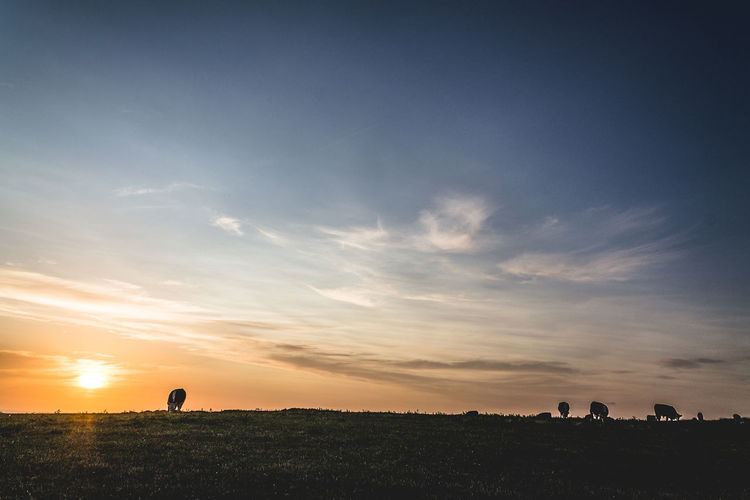 Grazing Field in Wales, at Sunset.Beautiful Sky Cloud Dramatic Sky Evening Fields Idyllic Landscape Landscape_Collection Nature Nature Photography Non-urban Scene Outdoors Scenics Sky Sunset Sunset_collection Traveling Your Ticket To Europe Visual Creativity British Culture The Minimalist - 2019 EyeEm Awards