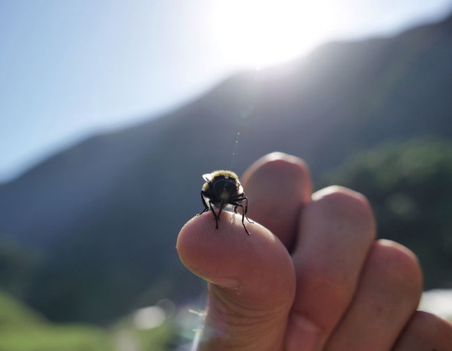 Cropped hand holding honey bee against mountain