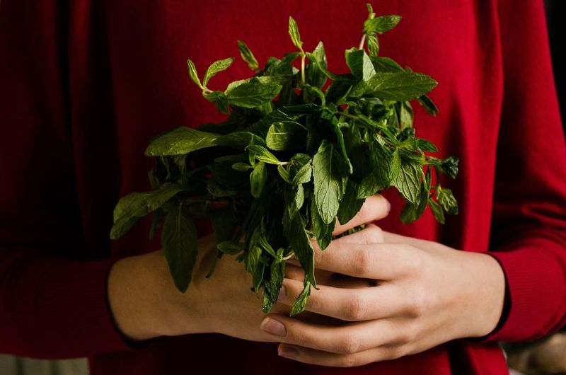 Midsection of woman holding herbs
