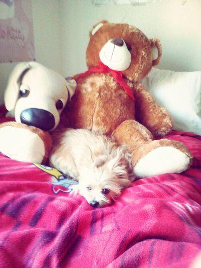 Doll Dog, Bigger Teddy And Dog