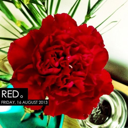 MyBirthday 160813 Photooftheday InstaCC Instacccolorsd1 Red Flower Carnation Photo365 K8marieuk Birthday Nature Beautiful Cameraplus HDR Hdraddict Iphoneonly