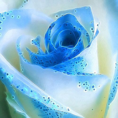 Rose🌹 Roses Flower Floral Flowers, Nature And Beauty Photographyart Art ArtWork Blue