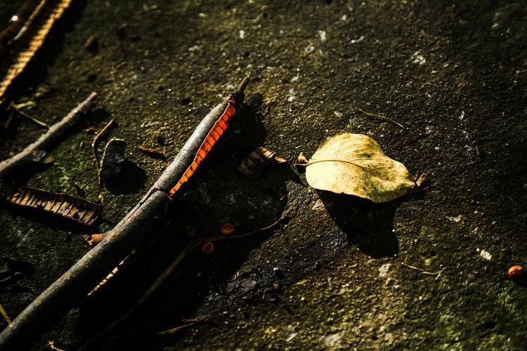 High angle view of dry leaf on metal