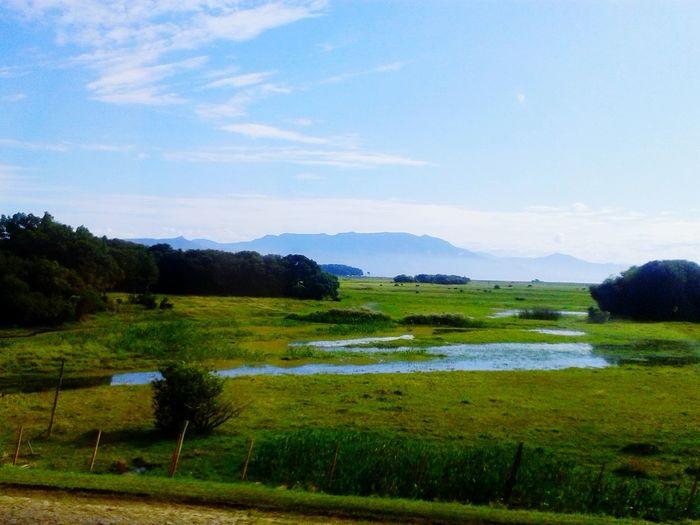 EyeEm Nature Lover BigBiggerBiggest Enjoying Life Nature ArtInMyLife Landscape Proveyouaregreen