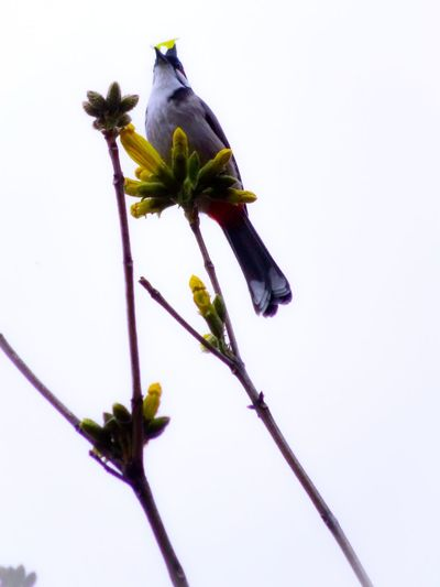 Funny expression Bird Eating Flower Bulbul Bird Flower Head Flower Close-up Plant