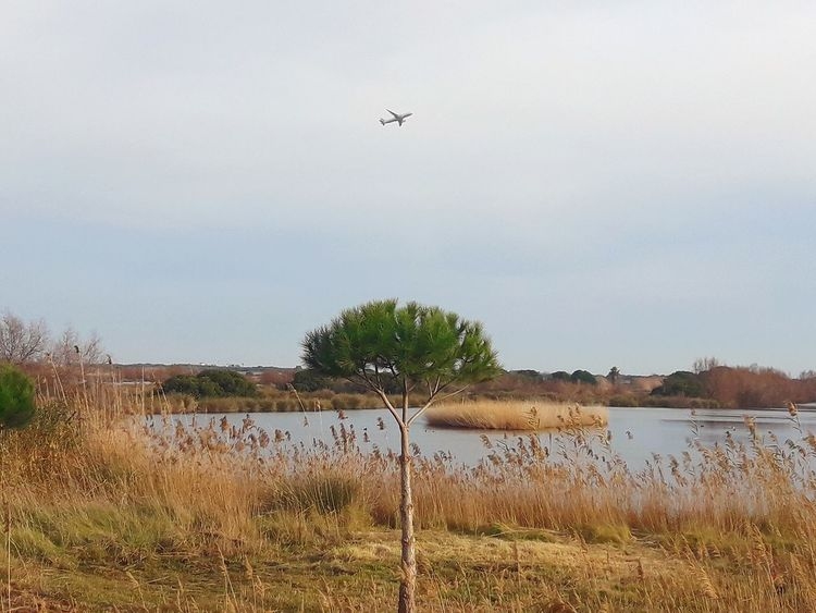 """Pond. Natural park. Place: Delta del Llobregat. """"Mirador Reguera salobres."""" Tree Plane Mirador Del Río Catalunya Nature Lake Lake View Natural Park Day"""