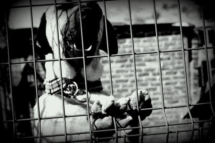 Turkey Izmir Izmir/urla Dog Animal