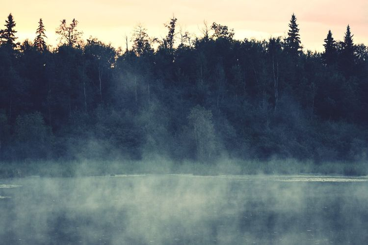 Fog on the