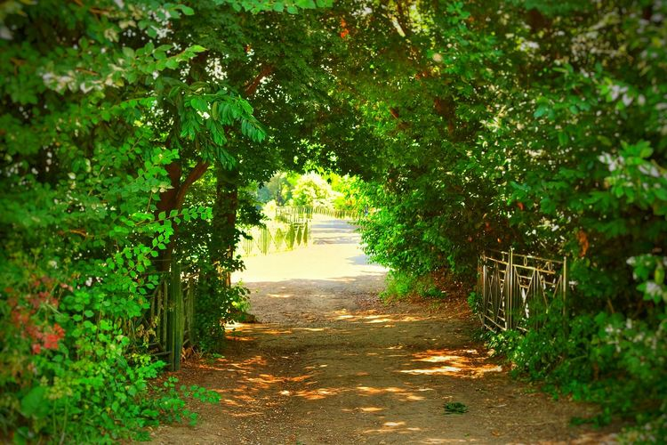 Footpath leading towards trees
