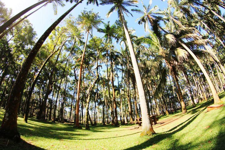 Cocotiers - Anse des Cascades, Reunion Reunion Island 974 974Paradise Anse Des Cascades Coconut Trees Coconut Palm Tree Fisheye Anna-Dévi Moser©