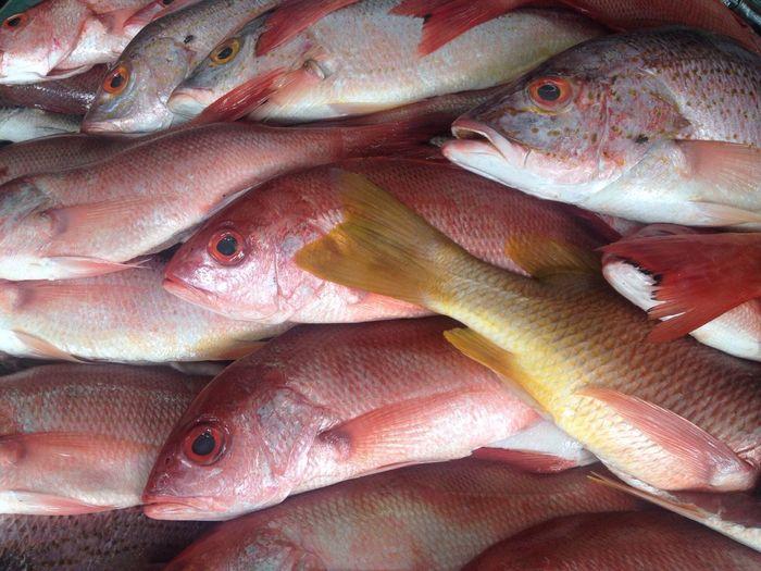 Full frame shot of fish for sale at market stall
