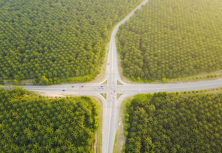 aerial view of palm plantation Melaka Beauty In Nature Day Environment Field Grass Green Color Growth High Angle View Land Landscape Malaysia Nature No People Outdoors Palm Plantations Plant Road Scenics - Nature Tranquil Scene Tranquility Transportation Tree