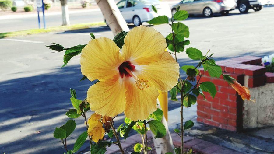Hibiscusflower Lovelovelove Taking Photos Enjoying Life Love And Freedom Love <3 Godsbeautifulcreation Flowers beautiful flowers