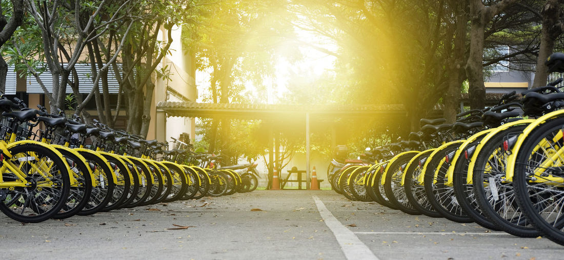 Rows of bright yellow public rental bikes on a street. Bicycle Bicycle Rack Day In A Row Land Vehicle Mode Of Transport Nature No People Outdoors Road Stationary Sunlight Tire Transportation Tree Wheel