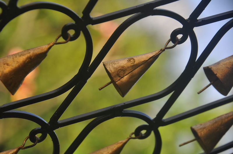 Close-up of dry leaves on metal fence