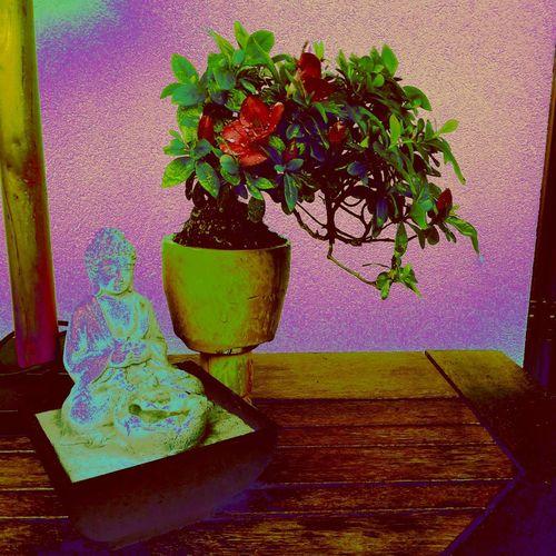 Zen Plant First Eyeem Photo