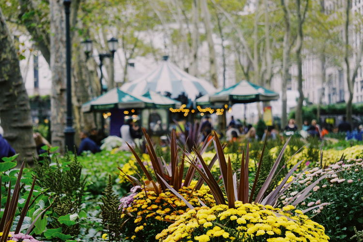 Bryant Park NYC Bryant Park  NY NYC NYC Photography New York New York City Beauty In Nature Bryantpark Close-up Day Flower Flower Head Focus On Foreground Fragility Freshness Growth Nature No People Outdoors Park Plant Tree