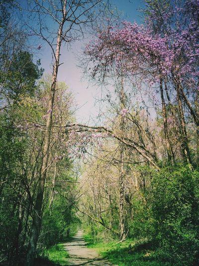 Georgia hikes