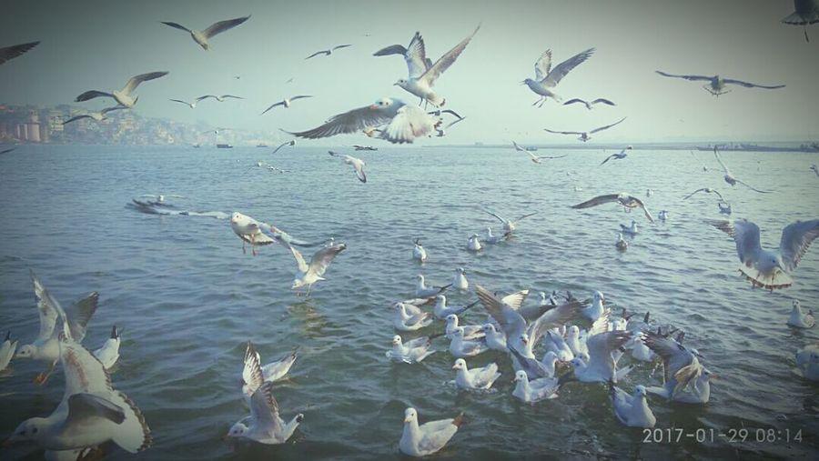 Flying Bird Seagull Spread Wings Flock Of Birds Mid-air Pelican Water Colony Bird Photography Bird-life Wildlife & Nature Bhawana TCPM