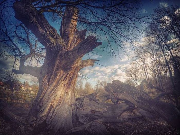 400 Years... Wanderlust Wood Exploring Epic Trailrunner Trailrunningviews Trailporn Trailrunning Runningman Runningwild Running Old Adventure Suunto Dream Freedom Free Forest Goprohero4 Gopro Goprooftheday Clouds Colorful Beauty nature mystic