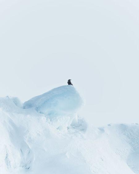 Bird on snow covered landscape against sky