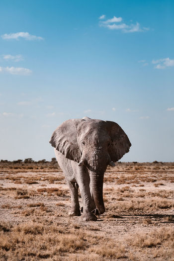 Elephant standing on land