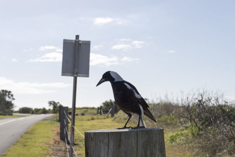Bird perching on wooden post against sky
