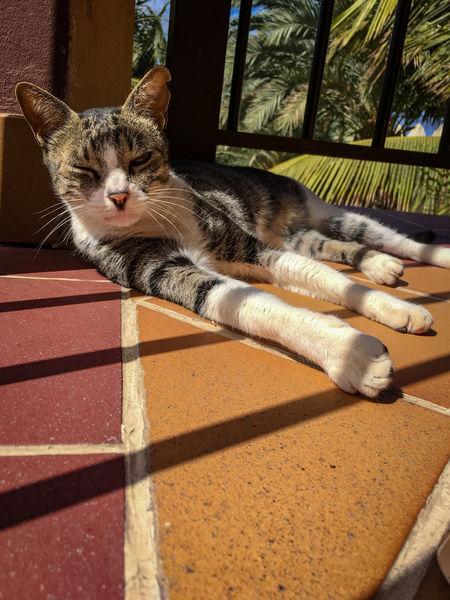 Cats Of EyeEm Cats Sunbathing Animal Themes Cat Cat Lovers Cat Sun Bathing Cat Sunning Cats Cat♡ Sunbathing Cat