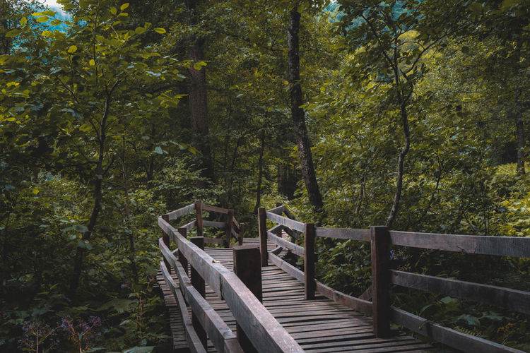 Lonely Bridge Forest Tree EyeEm Best Shots EyeEmNewHere EyeEm Selects Tree Footbridge Railing Rope Bridge Pathway Woods Greenery Walkway Flora Green Stairs